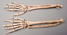 Halloween Aged Skeleton Forearms Life-Size Human Skeleton, Left & Right, NEW