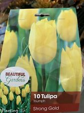 10 Tulip Strong Gold Triumph Tulip (Pack of 10 Bulbs) Zones: 3-8
