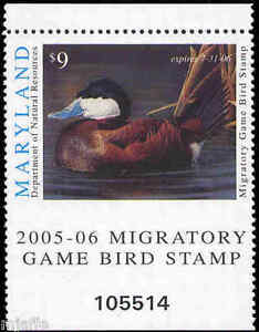 MARYLAND 2005 Duck Stamp IMPERF AT BOTTOM  BETWEEN STAMP AND TAB NICE ERROR!