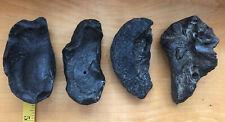Fossilized Whale Ear Bone*4 Inch Lot Of 4 Southeastern Costal 2 Lbs +