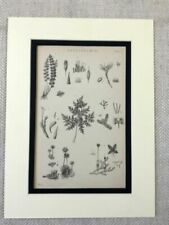 Antique (Pre - 1900) Black Botanical Art Prints