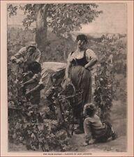 PICKING GRAPES, HARVEST, WINE, Antique Engraving, Original 1886