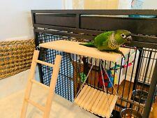 Hamster Wooden Toy Set Pack of 3, Swing, Ladder & Resting Platform