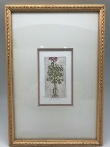 RACHEL ISAAC ETCHING - Straw Flower