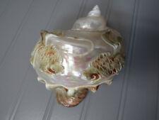 "Antique Large Genuine Turbo Marmoratus Carved Shell Koi Fish 5 1/2"" Long Beauty!"