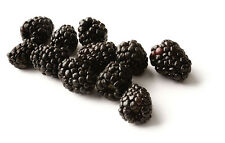 Black Raspberry Seed Oil very potent antioxidant - 2oz