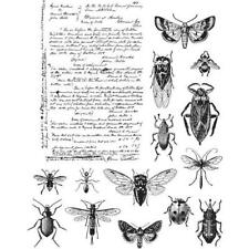 Tim Holtz Cling Rubber Stamps - Entomology CMS328