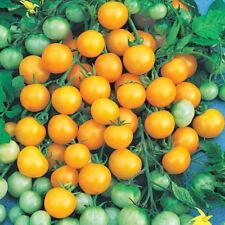 Tomato Honeybee F1 500 seeds ORGANIC / NON GMO