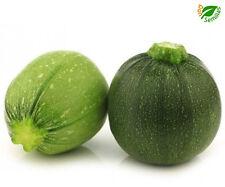 Calabacín Redondo de Niza ( 20 semillas ) seeds - Calabacin
