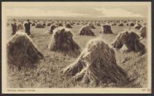 1932? Canada Sepia Scene Card #459, Oatfield, Western Canada, Unused