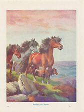 SHETLAND PONY HORSES BY ENGLISH SEASHORE PONY ENGLAND PONY VINTAGE ART PRINT