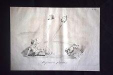 Incisione d'allegoria e satira Pio IX, Napoleone III, Italia Don Pirlone 1851