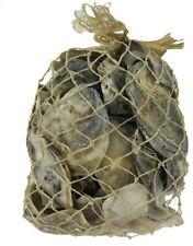 """Oyster Shells in Abaca Net 6x10"""""""