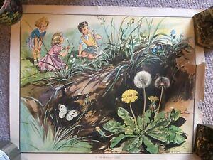 "Eileen Soper 1950's Vintage School Education Poster 21"" x 17"" children-flowers"