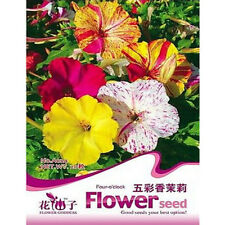 FD1797 Multicolored Jasmine Flower Seed Four O'clock Mirabilis Jalapa 20 Seeds