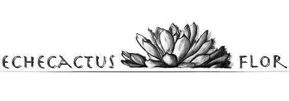 Echecactus Flor