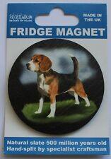 Beagle -  Dog - Fridge Magnet - Welsh Slate