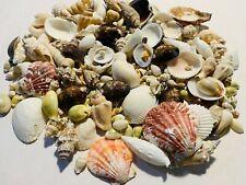 200+ Small Mixed Seashells, Cowries, Assorted Craft Shells Mix Free Ship!