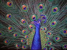 Peacock Exotic male bird Peafowl wildlife painting