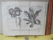 Vintage Print,BEARS EAR,Spectacle de la Nature,1736,Tree,Plate 4