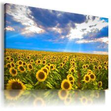 SUNFLOWERS YELLOW SUMMER FLOWER FIELDS Canvas Wall Art Picture Large FL13 MATAGA