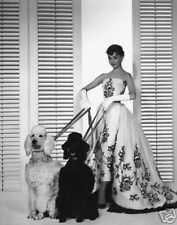 AUDREY HEPBURN 16x20 SUPER LARGE PHOTO WHITE DRESS + 2 POODLES PICTURE PRINT