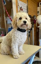 More details for dog grooming comfort slider noose purple