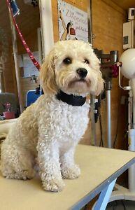 Dog grooming comfort Slider Noose blue