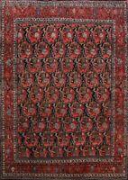 Antique Vegetable Dye Bidjar Halvaei Area Rug Hand-Knotted All-Over Carpet 11x14