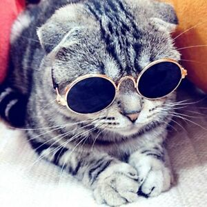 Sunglasses for Cats and dogs Pets Products eye wear round glasses Free Shipping