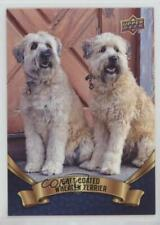 2018 Upper Deck Canine Collection Blue Soft Coated Wheaten Terrier #135 0n8