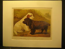 C. Burton Barber, Field Spaniel's, Color lith Cassell's Illustrated Dogs1881