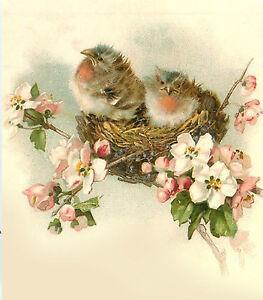 "Waterslide Decals (4pcs 2.5""x3.5""each) Baby Birds FLONZ 0705 Vintage Birds"