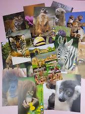 18 Postkarten Zoo Heidelberg Sammlung Ansichtskarten Zootiere Tiere Sammler