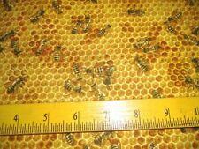 "Elizabeth's Studio Fabric ""Bees and Flowers"" Honey Bees on Honey Comb Yellow"