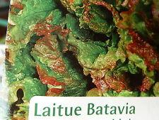 Graines semences Laitue BATAVIA Rouge Grenobloise Précoces - SEEDS