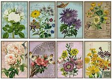 Cut Flowers  ~ Card Making Toppers / Scrapbooking / Crafting