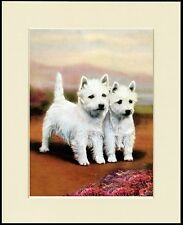 WEST HIGHLAND WHITE WESTIE TERRIER CUTE LITTLE PRINT