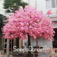 10 Pcs Seeds Red Japanese Cherry Plants Courtyard Garden Bonsai Tree Sakura NEW