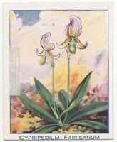 Fairrie's Paphiopedilum Orchid Paphiopedilum fairrieanum 90+ Y/O Trade Ad Card