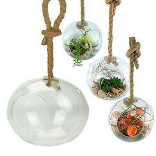XXL Glaskugel Zum Hngen Terrarium Hngevase Deko Pflanzen Hngetopf 20 Cm