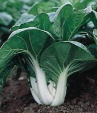 PAK CHOI - Chinese cabbage (700 SEEDS)