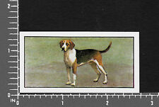 Foxhound Dog from series Dogs by Barbers Teas tea card #13