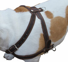 "Genuine Leather Pulling Dog Harness 1"" wide 33""-37"" chest Rottweiler Cane Corso"