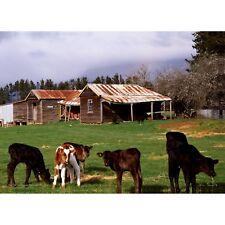 The Old Farmhouse, Montana 1000 piece Jigsaw by John Temple