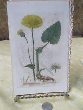 Vintage Print,GREAT LEOPARDS BONE,Britsh Flowering Plants,Baxter,1840