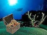 Diver4's Treasure Chest