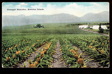 c1924 Island Curio 38,000 acres Pineapple Plantation Hawaii postcard