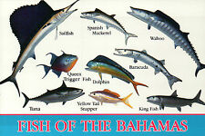 Fish of the Bahamas, Sport Fishing Paradise, Sailfish, Baracuda, Tuna - Postcard