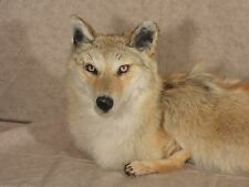 taxidermy SOFT coyote mount stuffed animal present gift cabin decor new bobcat 3